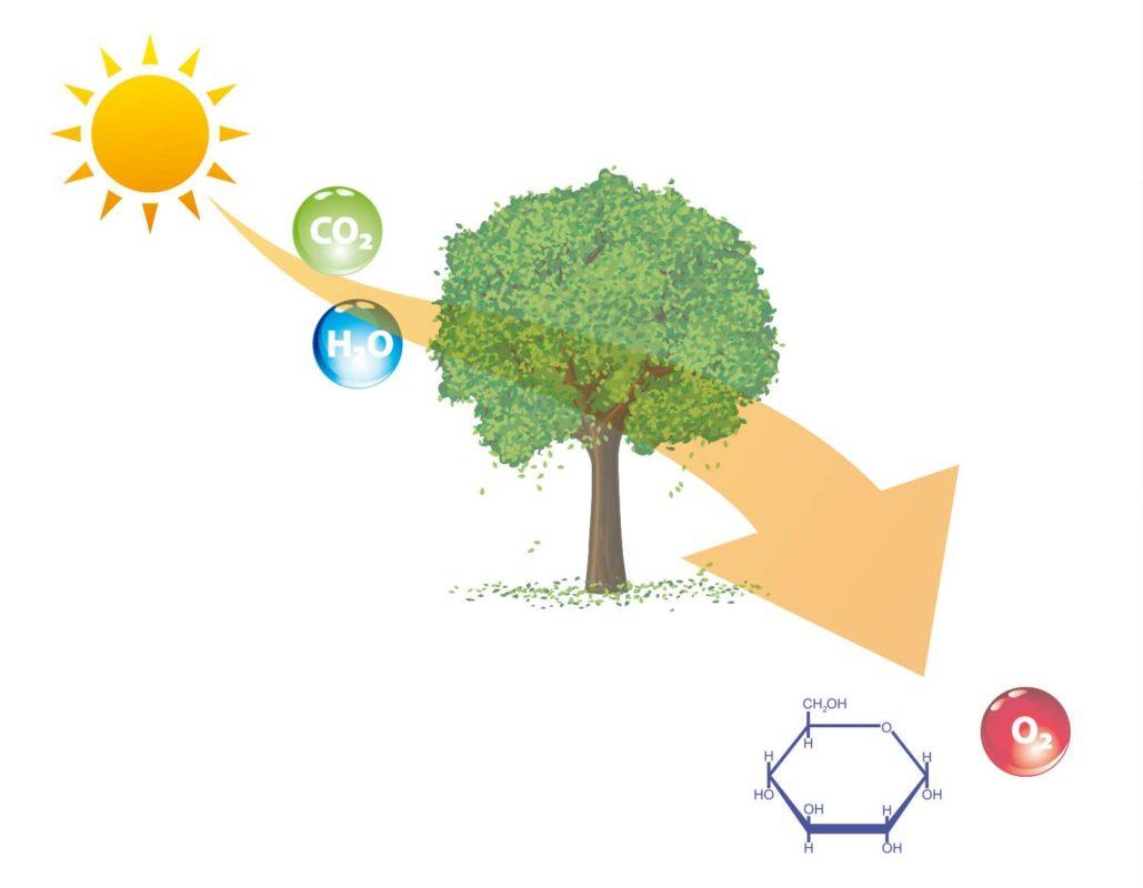 fotocatalisi